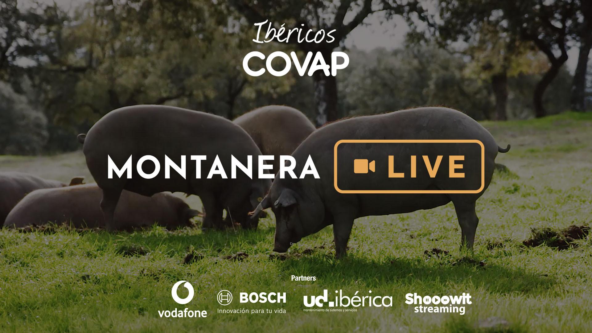 Montanera Live | Ibéricos COVAP